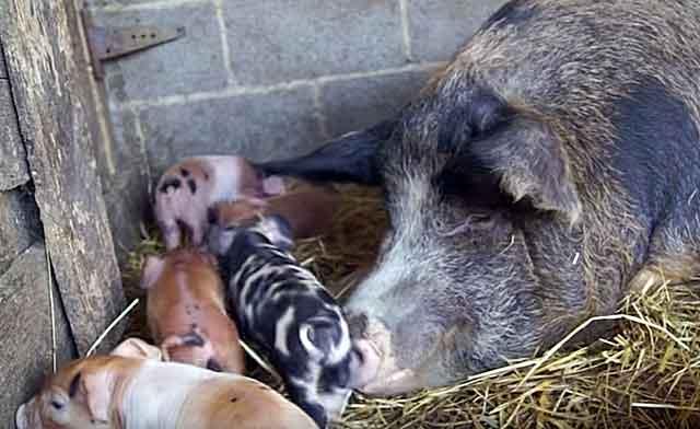 Для мамы с малышами лучше измельченная структура
