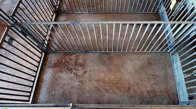 На одного животного требуется станок площадью от 2 до 5 кв. м.