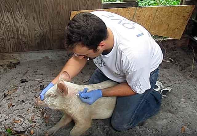 Возможно понадобится помощь ветеринара