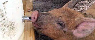 Животные не могут жить без воды