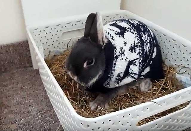 Забавный свитер