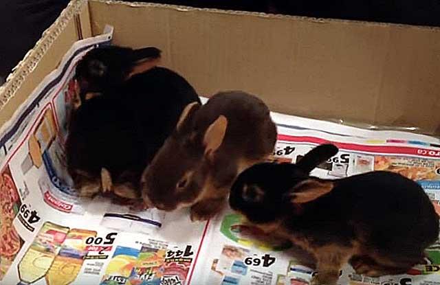 Покупайте животных у проверенных заводчиков