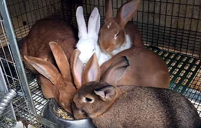 Даже при хорошем аппетите животные не набирают массу