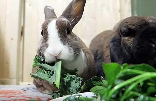При легкой форме питомцы могут кушать