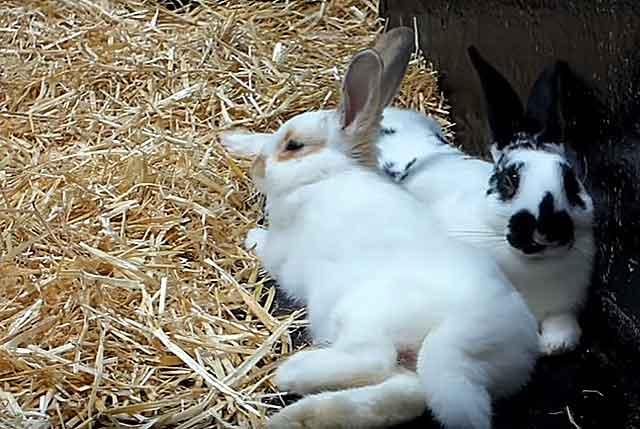 Экструдированный корм для кроликов