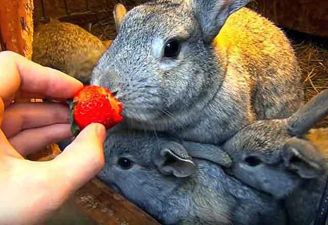 Любят фрукты