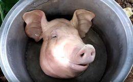 Как разделывать свиную голову