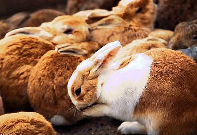 понос у кроликов причина и лечение