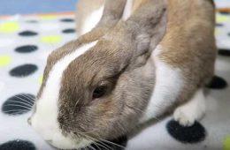 Почему могут дохнуть кролики