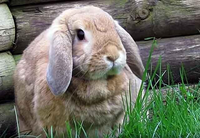 Природа кроликов разнообразна