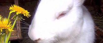 Абсолютно белые животные