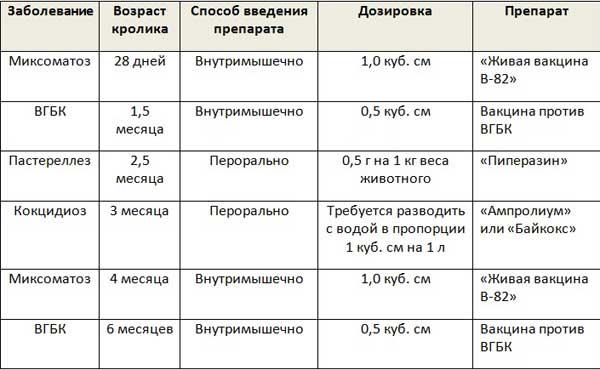 Схема вакцинации кроликов без учета не обязательных прививок