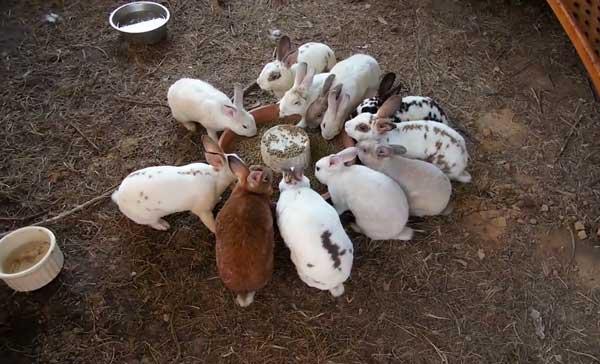 Животные любят пожевать