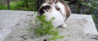 Зеленый корм полезен