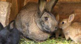 Подогрев в маточнике для кроликов