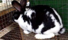 Сетка на пол в клетку для кроликов