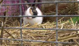 Какой сенник нужен для кроликов