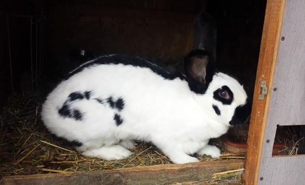 можно ли случать кроликов родственников