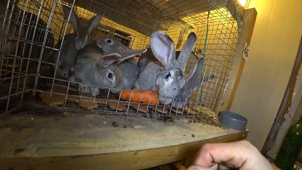 Кушают морковку
