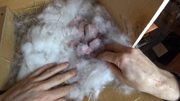 Новорожденные лежат в пуху
