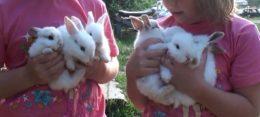 Когда нужно отсаживать крольчат от крольчихи