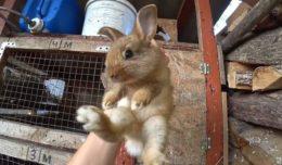 Все про новорожденных кроликов