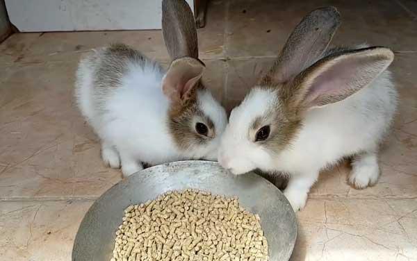 Животные кушают