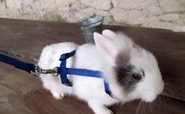 Шлейки для кроликов
