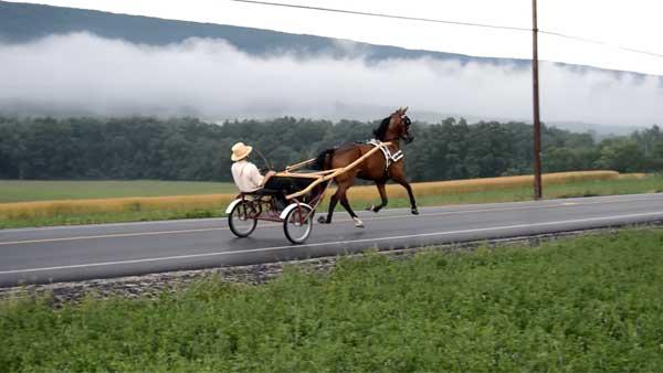 Норовистые лошадки