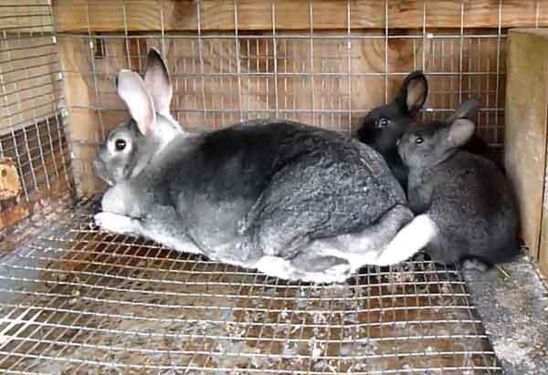 Качественный мех у животных в 8-9 месяцев