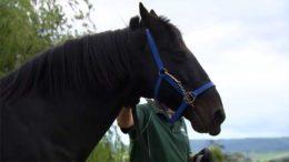 Стандартбредные лошади: порода американских рысаков