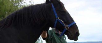 Красивый быстрый конь
