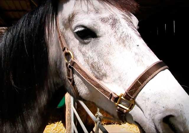 Шея лошади длинная, немного изогнутая