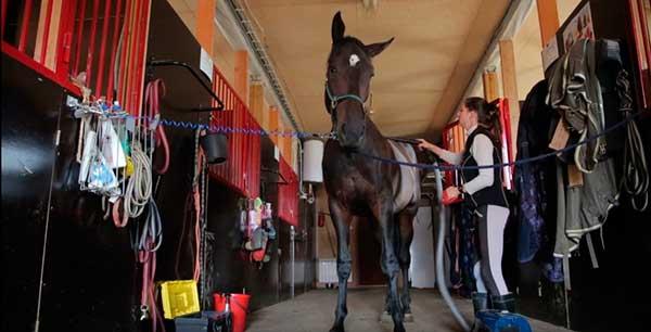 Используются в конном спорте, при охоте и иппотерапии