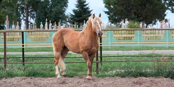 Часто используются в конном спорте
