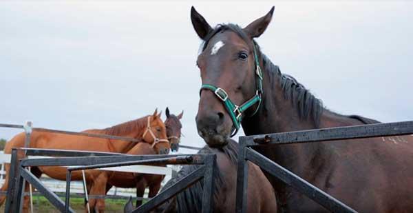 Буденновские лошади - высокоскоростные