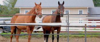 Лошади для верховой езды