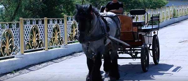 Коренастые лошади с мощным корпусом