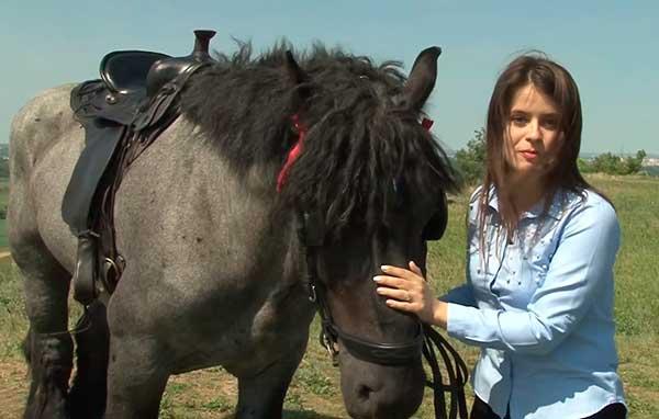 Лошади-великаны