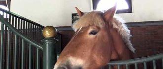 Лошадь с широкой костью