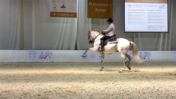 Андалузская лошадь лежит в основе многих пород