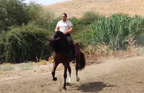 Смирная лошадка
