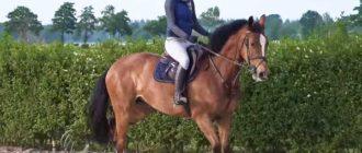 Наездница на гордом коне