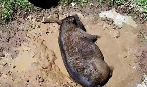 Принимает грязевые ванны