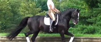 Девушка скачет на коне