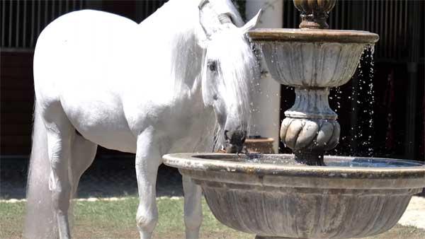 Лошадь пьет из фонтана