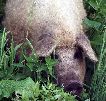 Спрятался в траве