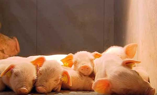 Поели и спят