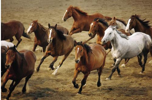 максимальная скорость лошади км ч