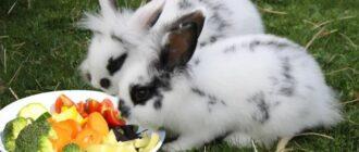 Что едят кролики декоративные
